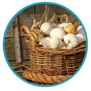 Het Eitwit Dieet Met Eieren