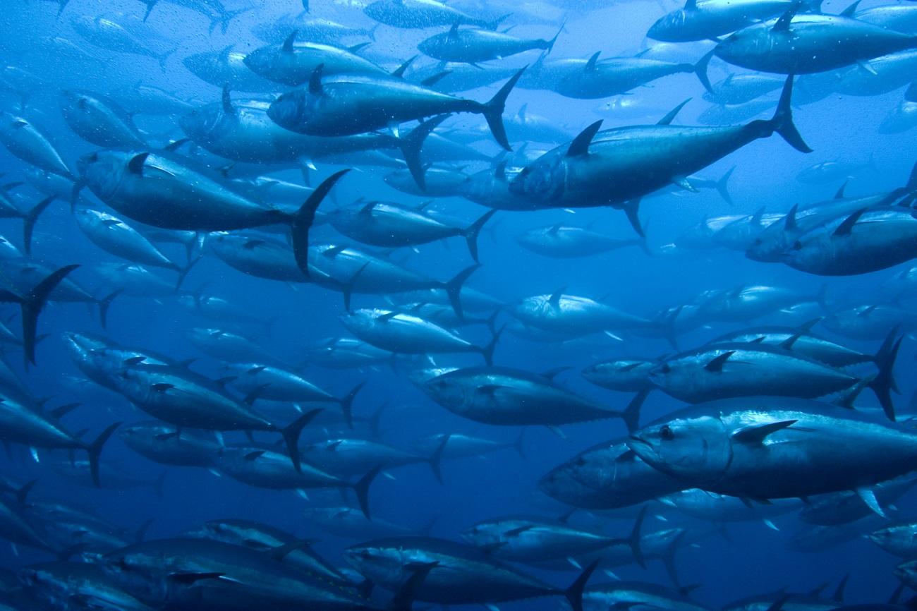 tonijn gezond afvallen